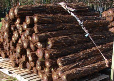 Ponga Logs